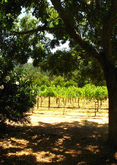 Vineyard Greeting Card featuring the photograph Vineyard View by Kim Pascu