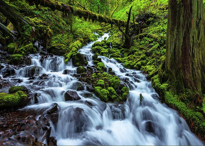 River Greeting Card featuring the photograph Wahkeena by Chad Dutson