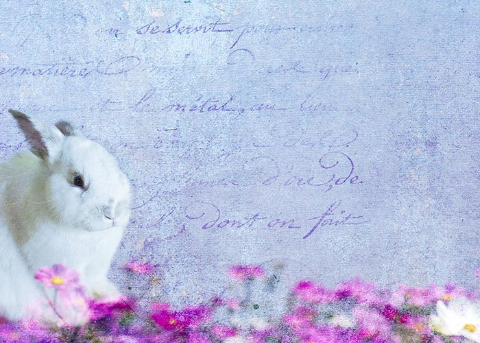 Bunny Greeting Card featuring the photograph Waiting For Eggs by Rebecca Cozart