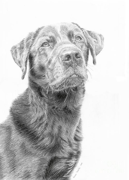 Dog Greeting Card featuring the drawing Waiting by True Image