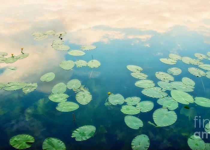 Pond Greeting Card featuring the photograph Waterlilies Home by Priska Wettstein