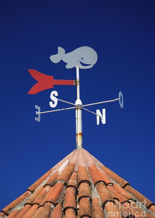 Whale Greeting Card featuring the photograph Whale Weather Vane by Gaspar Avila