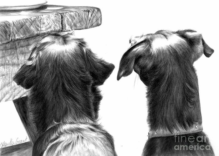 Dog Drawing Greeting Card featuring the drawing What's On The Table by Sheona Hamilton-Grant