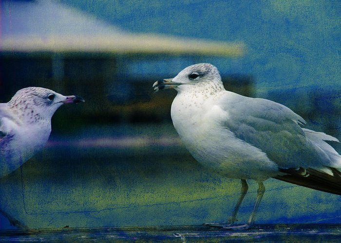 Seagulls Greeting Card featuring the photograph What's Up Bro' by Susanne Van Hulst