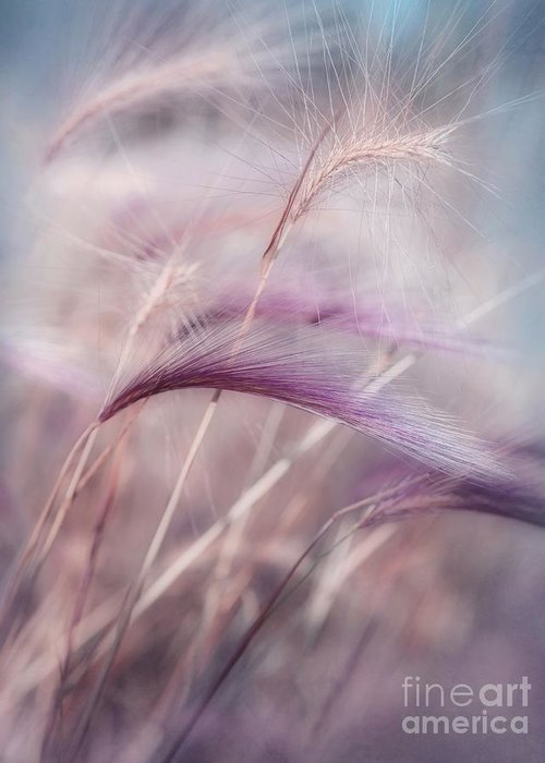 Barley Greeting Card featuring the photograph Whispers In The Wind by Priska Wettstein