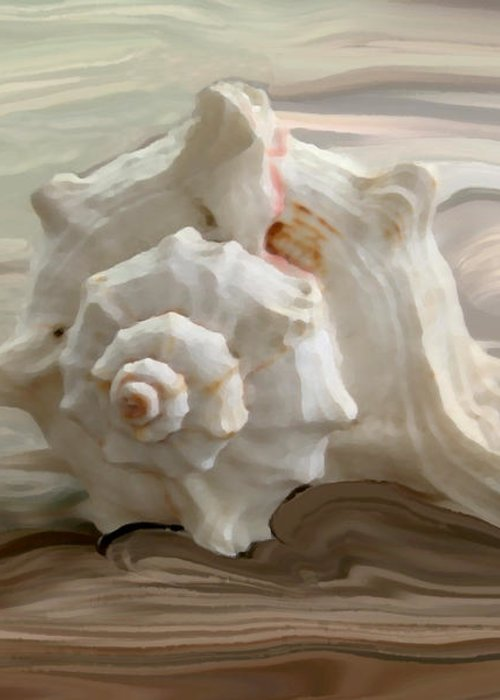 Seashell Greeting Card featuring the photograph White Shell by Linda Sannuti
