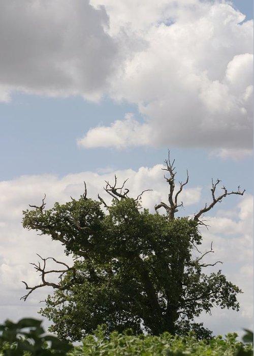 Tree Greeting Card featuring the photograph Wild Sky by Dagmar Ceki