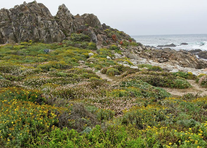 Pebble Greeting Card featuring the photograph Wildflowers At China Rock - Pebble Beach - California by Brendan Reals