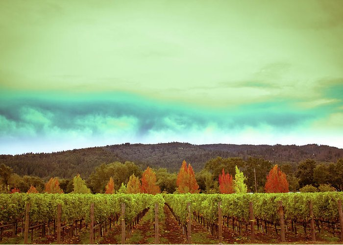 Wine Greeting Card featuring the photograph Wine In Time by Ryan Weddle