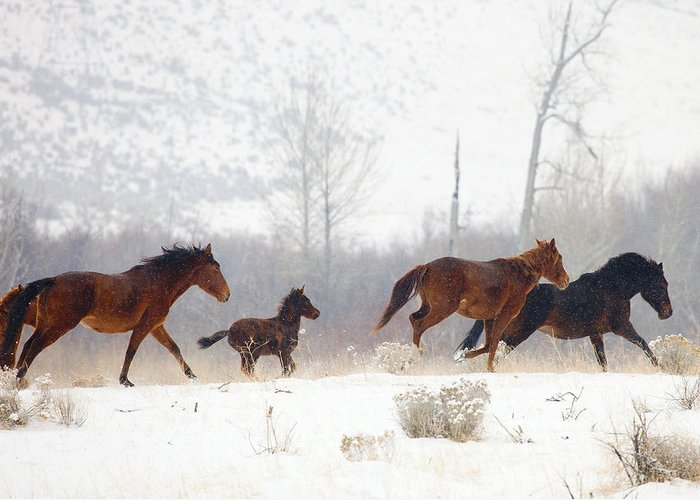 Mustangs Greeting Card featuring the photograph Winter Gallop by Mike Dawson
