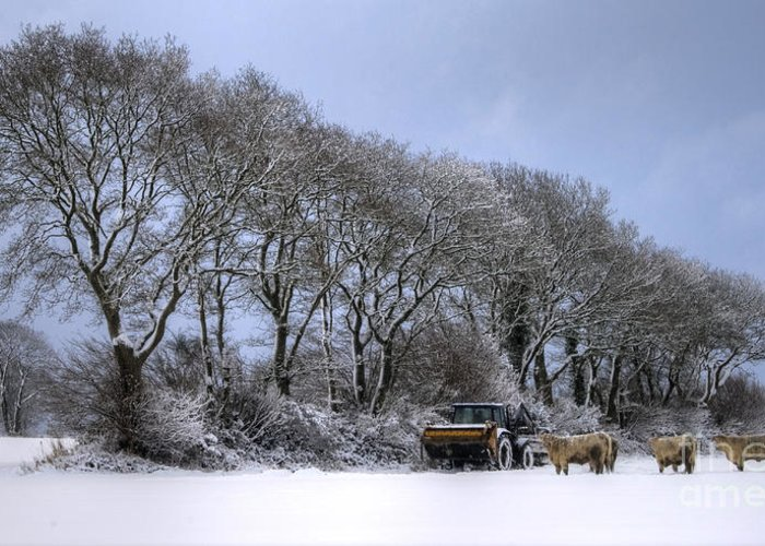 Cows Greeting Card featuring the photograph Winter Morning On The Farm by Sophie De Roumanie