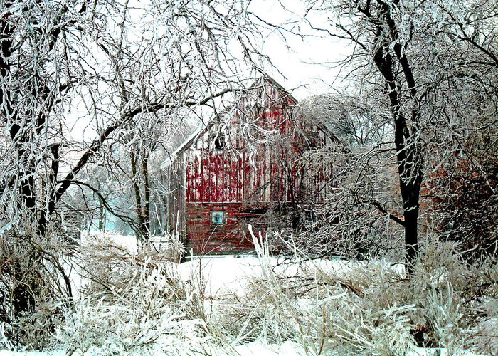 Christmas Greeting Card featuring the photograph Winter Wonderland by Julie Hamilton