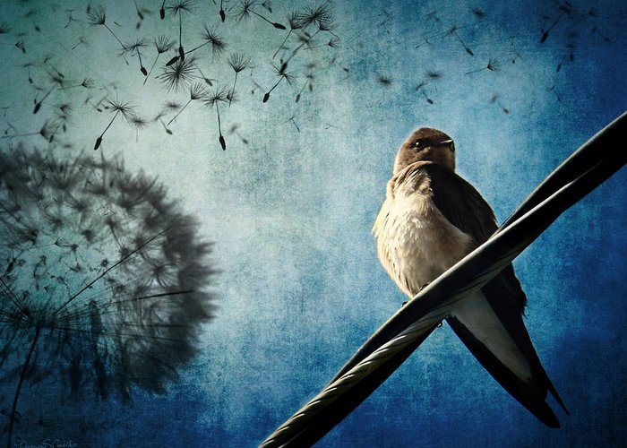 Swallow Greeting Card featuring the photograph Wishing Swallow by Nancy Coelho