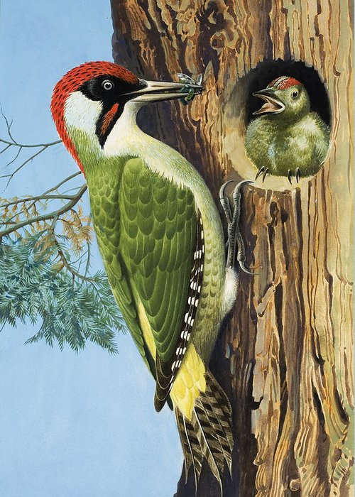 Woodpecker Greeting Card featuring the painting Woodpecker by RB Davis