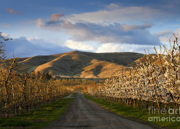 Yakima Valley Greeting Card featuring the photograph Yakima Valley Spring by Mike Dawson