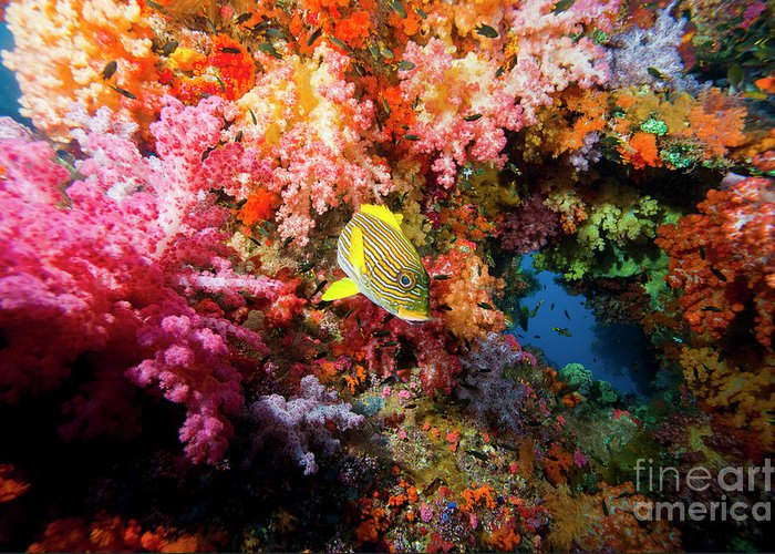 Indonesia Greeting Card featuring the photograph Yellow Banded Sweetlip Fish And Coral by Beverly Factor