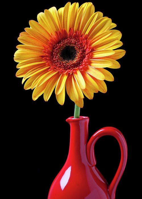 Mums Greeting Card featuring the photograph Yellow Fancy Daisy In Red Vase by Garry Gay