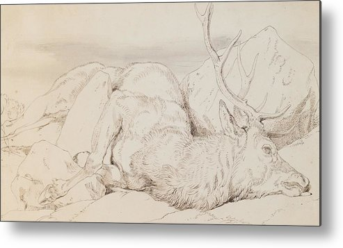 C19th Metal Print featuring the drawing A Dead Stag by Sir Edwin Landseer