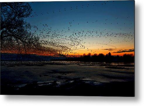 Matt Molloy Metal Print featuring the photograph The Swarm by Matt Molloy