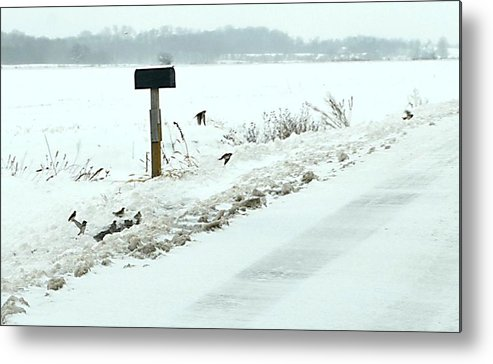 Indiana Scenes Metal Print featuring the photograph Winter Foragers by Julie Dant