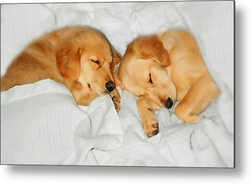 Golden Retriever Metal Print featuring the photograph Golden Retriever Dog Puppies Sleeping by Jennie Marie Schell