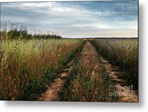 Adventure Metal Print featuring the photograph Countryside Tracks by Carlos Caetano