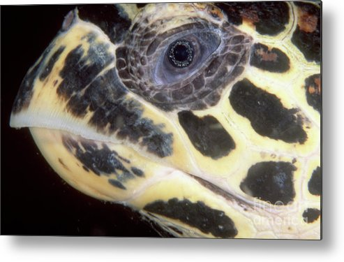 Thailand Metal Print featuring the photograph Extreme Close-up Of The Head by Beverly Factor