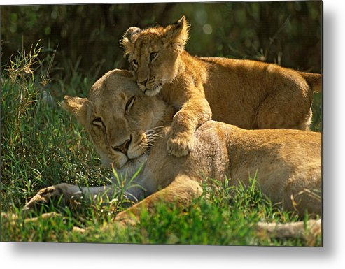 Africa Metal Print featuring the photograph I Love My Mother by Johan Elzenga