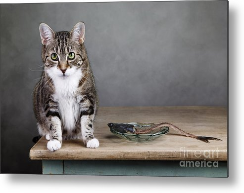 Cat Metal Print featuring the photograph Caught In The Act by Nailia Schwarz