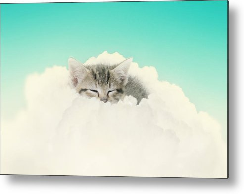 Kitten Metal Print featuring the photograph On Cloud Nine by Amy Tyler