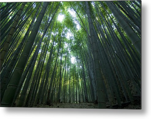 Bamboo Metal Print featuring the photograph Bamboo Forest by Aaron S Bedell