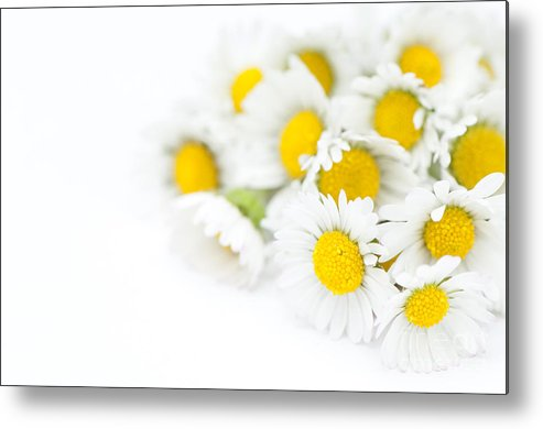 Floral Metal Print featuring the photograph Bunch Of Daisies by Anne Gilbert
