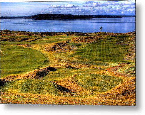 Chambers Bay Golf Course Metal Print featuring the photograph Chambers Bay Lone Tree by David Patterson