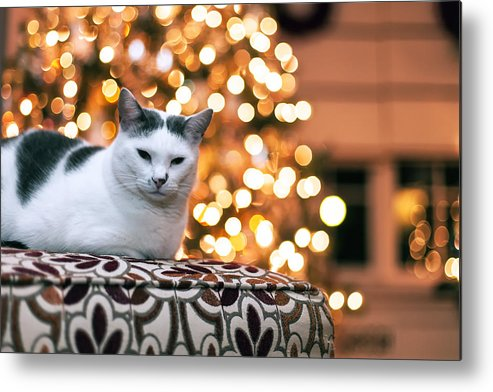 Pet Metal Print featuring the photograph Charly And The Xmas Tree by Edward Kreis
