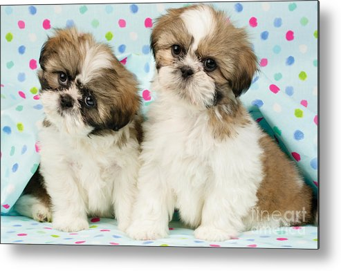 Horizontal Metal Print featuring the digital art Curious Twins by Greg Cuddiford