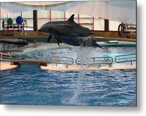 Inner Metal Print featuring the photograph Dolphin Show - National Aquarium In Baltimore Md - 1212249 by DC Photographer