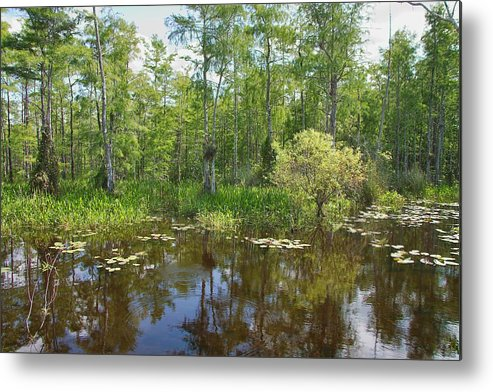 Everglades Metal Print featuring the photograph Everglades Lake by Rudy Umans