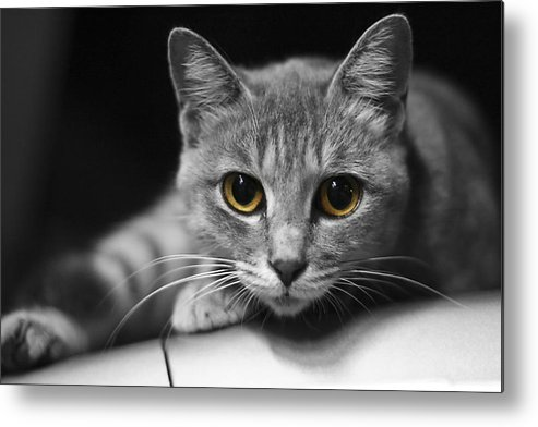 Cat Metal Print featuring the photograph Eyes Open Wide by JianGang Wang