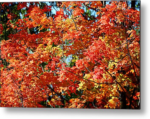 Metro Metal Print featuring the photograph Fall Foliage Colors 22 by Metro DC Photography