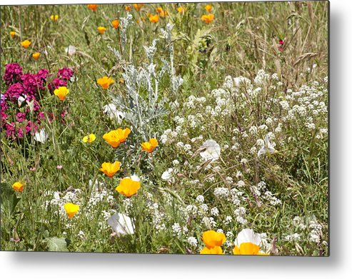Flowers Metal Print featuring the photograph Field Of Flowers by Artist and Photographer Laura Wrede