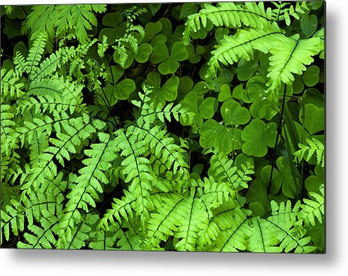Leaves Metal Print featuring the photograph Foliage At Springtime by Andrew Soundarajan