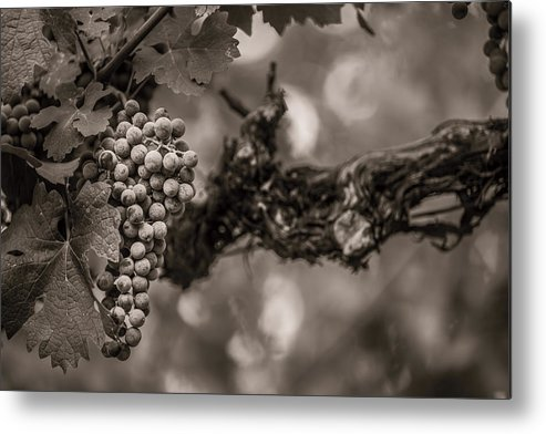 Fine Art Metal Print featuring the photograph Grapes In Grey 1 by Clint Brewer