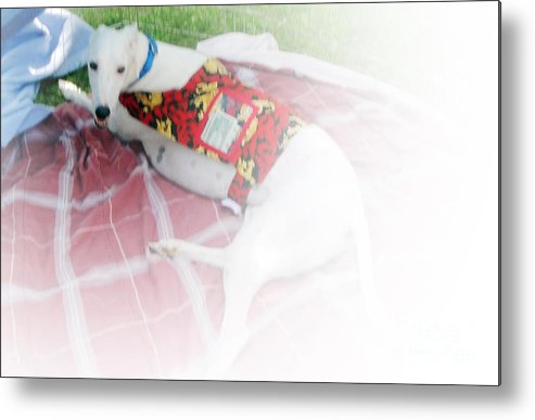 Greyhound Rescue Dog Metal Print featuring the mixed media Greyhound Rescue 5 by Jackie Bodnar