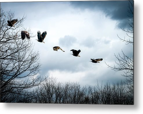 Eagle Metal Print featuring the photograph Half Second Of Flight by Bob Orsillo