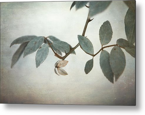 Leaves Metal Print featuring the photograph How Delicate This Balance by Laurie Search
