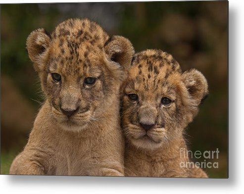 Adorable Metal Print featuring the photograph Lean On Me by Ashley Vincent