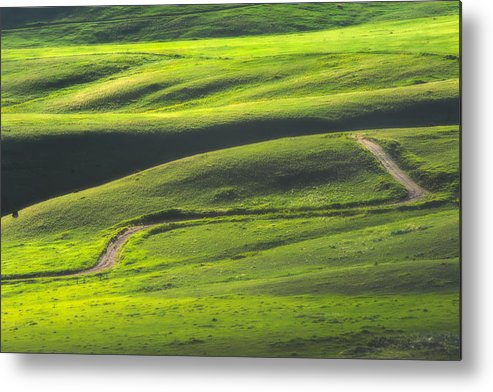 Green Metal Print featuring the photograph Luminous Green by Joan Herwig
