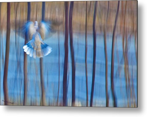 Poetry Metal Print featuring the photograph Morning Dove by Theresa Tahara
