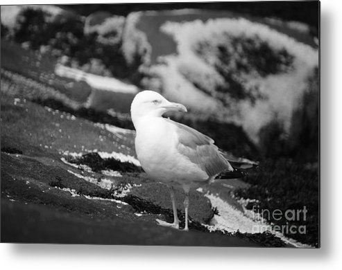 Bird Metal Print featuring the photograph My Turf by Luke Moore