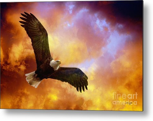 Eagle Metal Print featuring the photograph Perseverance by Lois Bryan